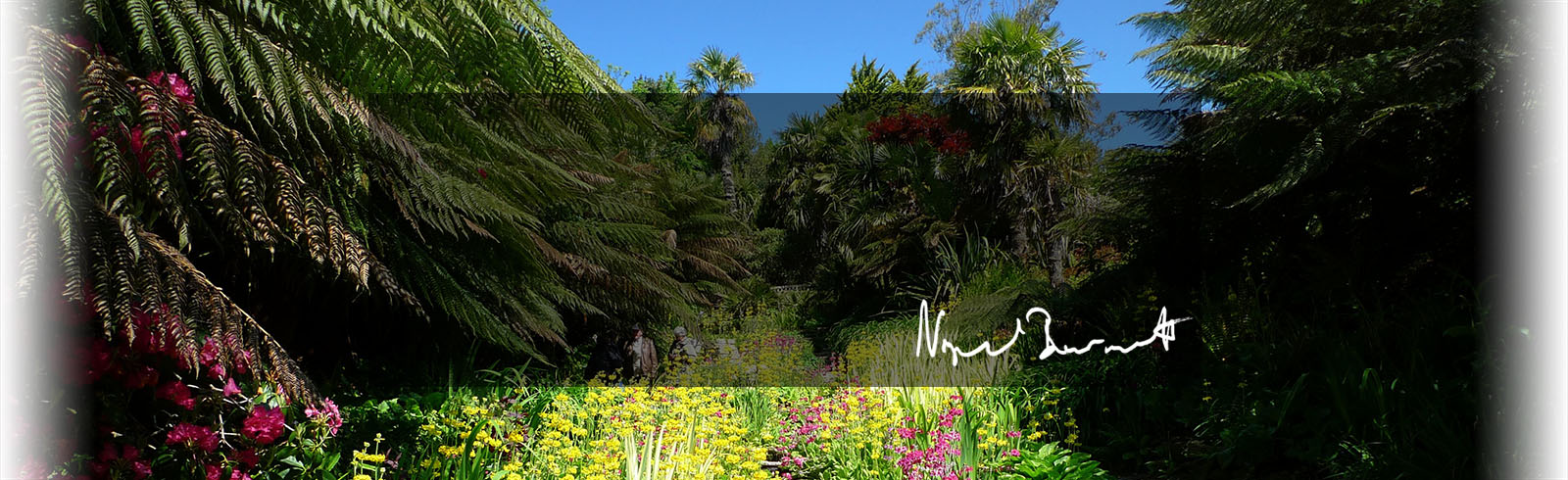 Lush image of the Gardens at Trebar with signature of N Burnett, client of Hodgsons Chartered Accountants in Cornwall